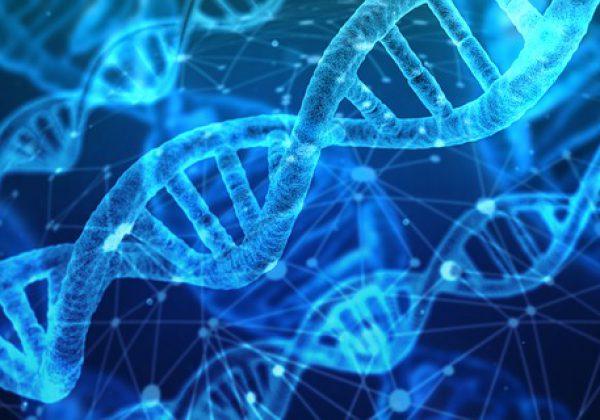 איך אנחנו יכולים לקבל את חלבון הקולגן לגופנו?
